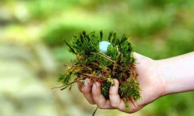 Anti mousse pelouse : Comment supprimer la mousse d'un gazon ?
