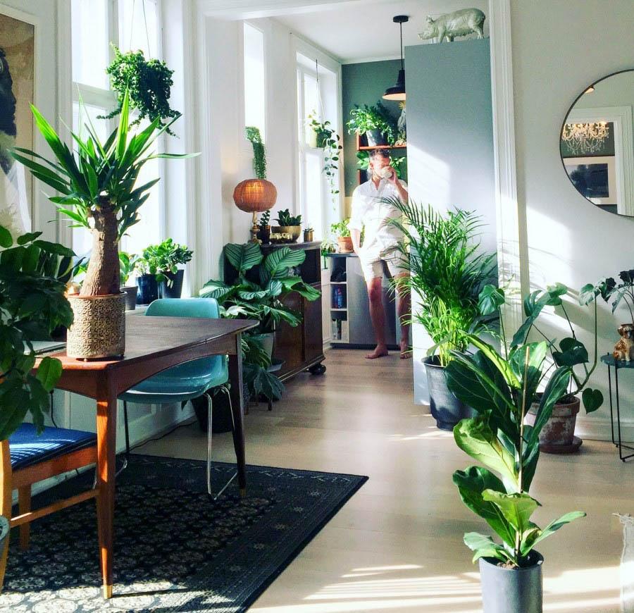 Plantes deco salon cocooning