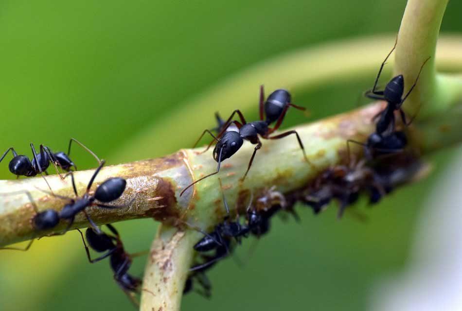 Comment se débarrasser des fourmis dans le jardin ?