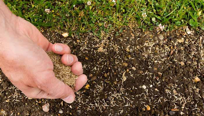 planter une pelouse