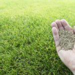 Semer du gazon : les étapes pour une pelouse de qualité