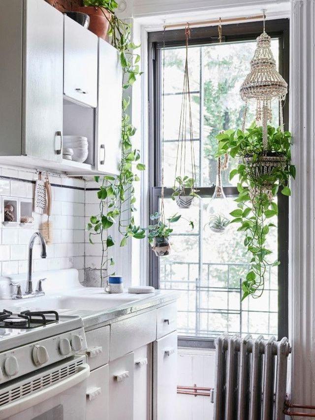Petite cuisine plantes