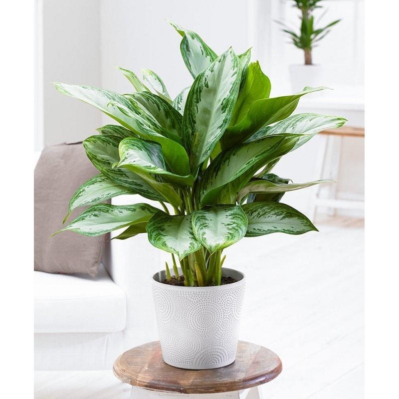 19 plantes d int rieur qui n ont pas besoin de lumi re du. Black Bedroom Furniture Sets. Home Design Ideas