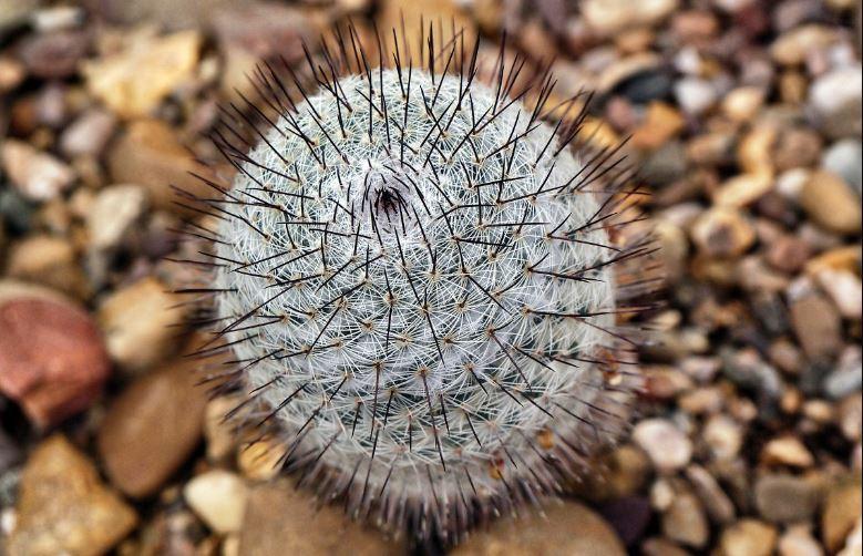 arroser cactus