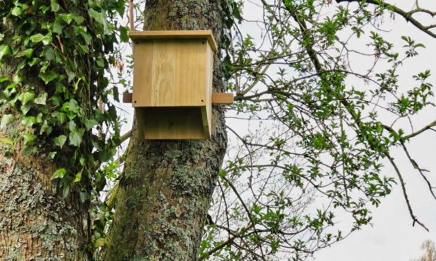 Construire un nichoir à chauve-souris : comment faire ?