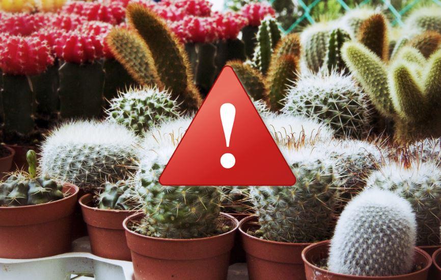 erreurs à éviter quand on arrose un cactus