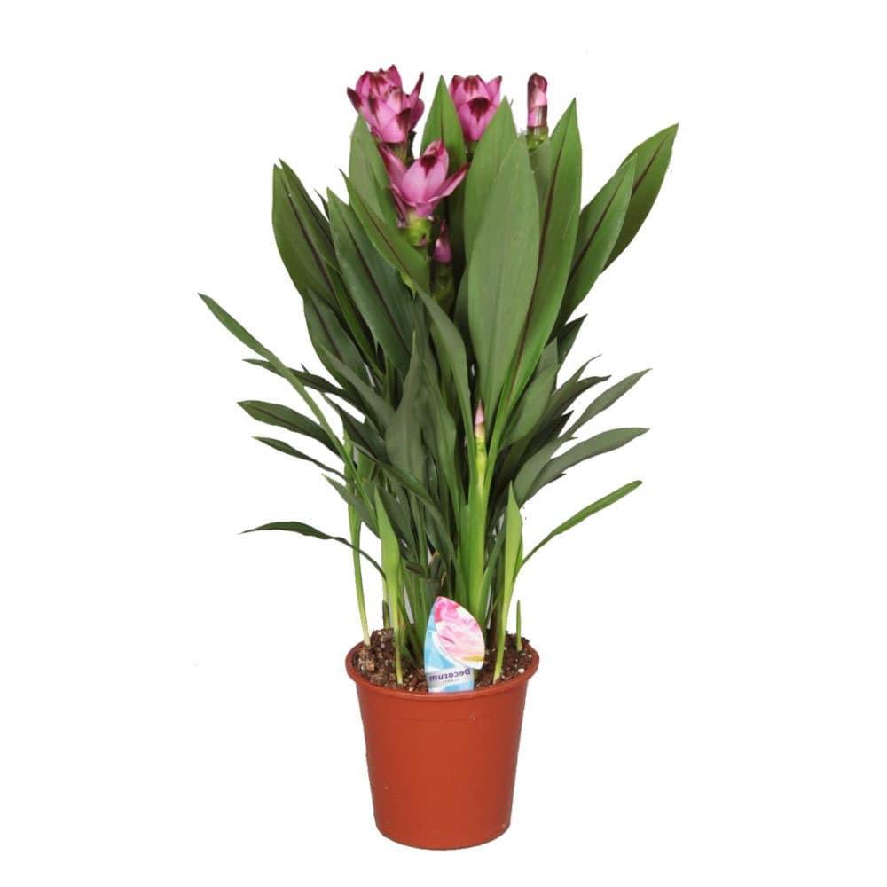 bouquet de fleurs exotiques - fleurs de curcuma