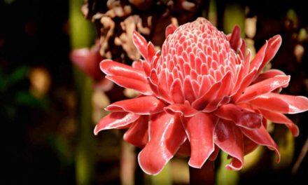 Les 20 plus belles plantes exotiques