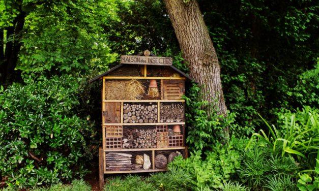 La maison à insectes
