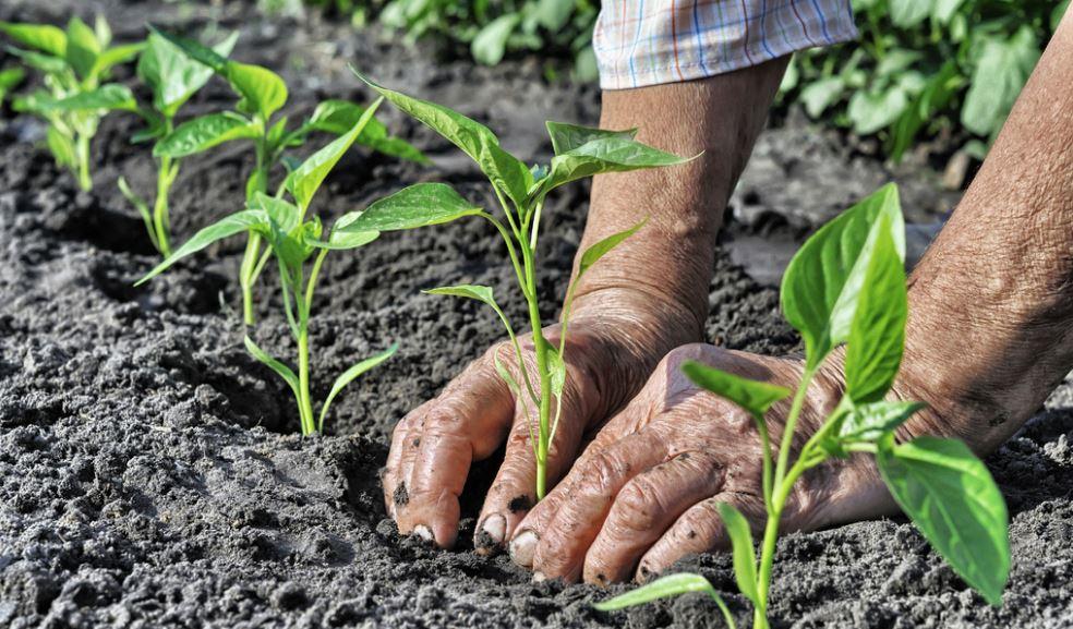Marc de café : les meilleurs façon de l'utiliser dans le jardin | Ctendance