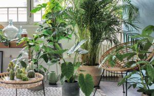 19 plantes d'interieur sans lumière