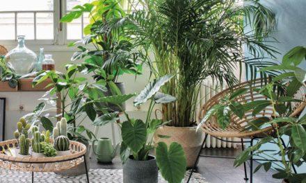 19 plantes d'intérieur qui n'ont pas besoin de lumière