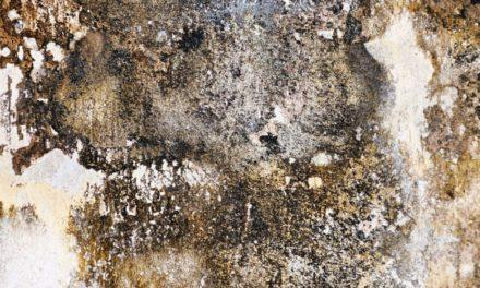 Salpêtre sur les murs : Qu'est-ce que c'est ? Comment le traiter ? Quels sont les dangers ?