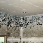 Moisissure mur : les causes et comment s'en débarrasser ?