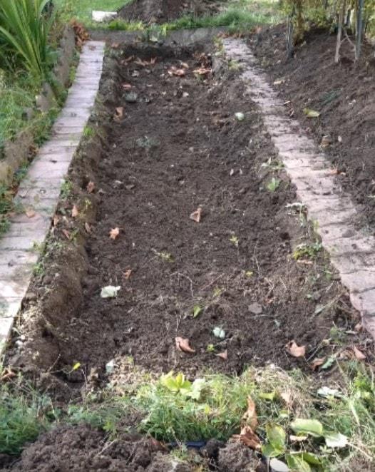 Creuser le sol avant de faire sa butte de permaculture