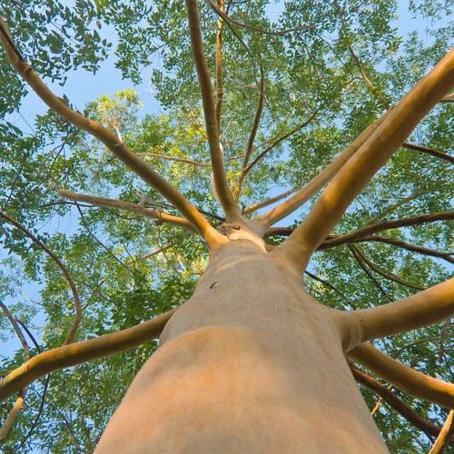 Arbre qui pousse vite : notre top 10 des arbres à croissance ...