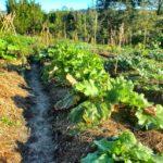 Créer facilement une butte de permaculture : guide, conseils et astuces !