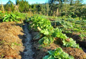 butte de permaculture salade