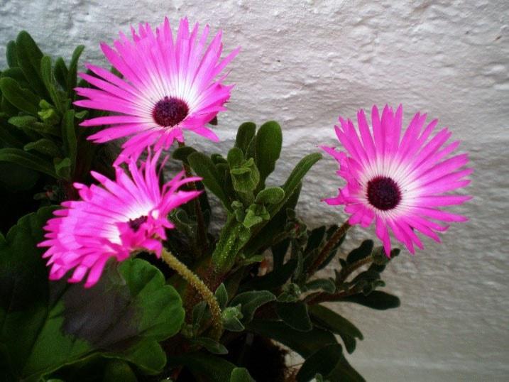Plante Grasse A Fleurs Selection Des Plus Belles Plantes Grasses