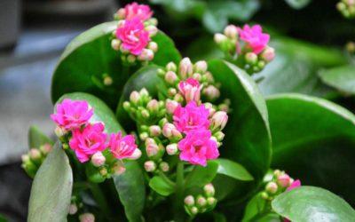 Plante grasse à fleur : notre liste complète