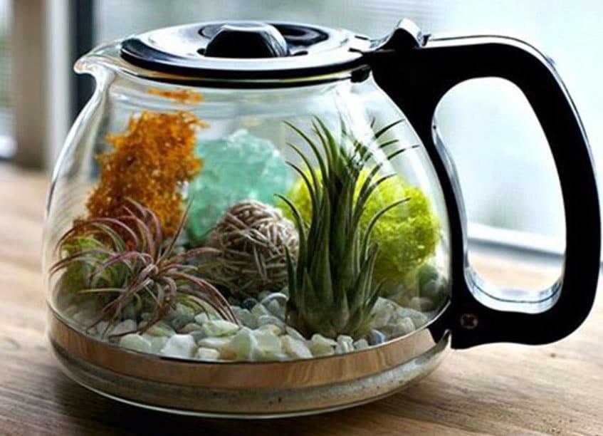 Cafetière terrarium