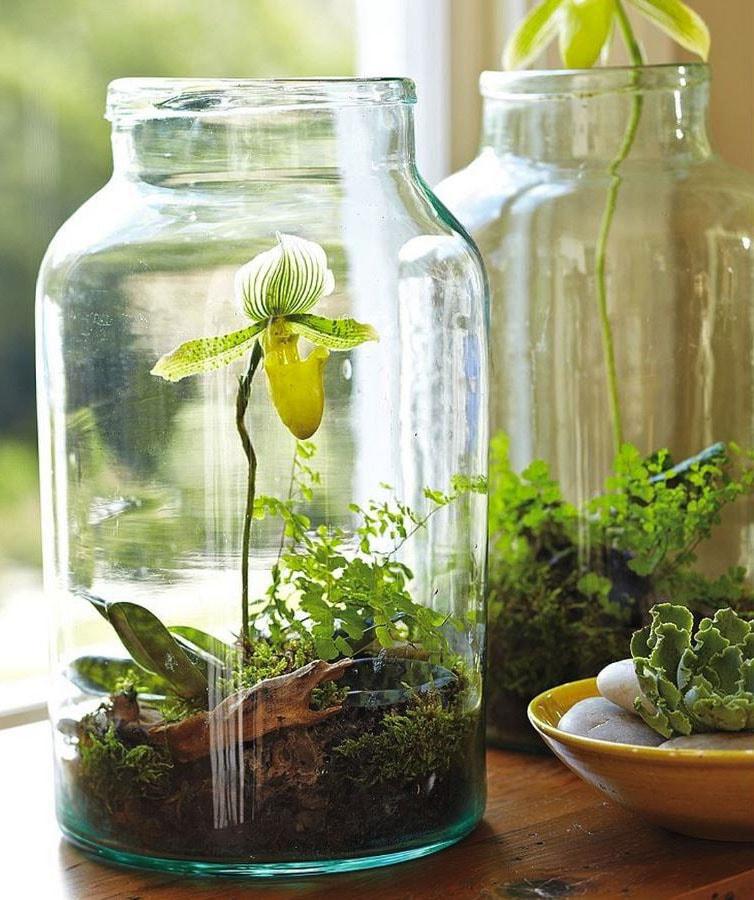 Orchidée en terrarium