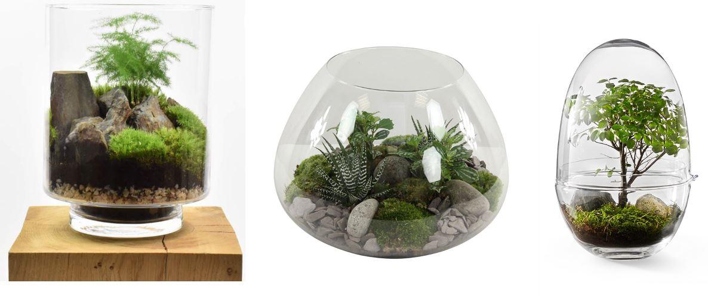 31 modèles de terrariums pour vos plantes d'intérieur