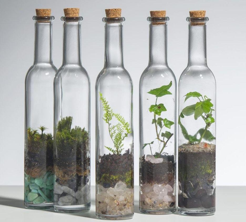 Terrarium dans des bouteilles