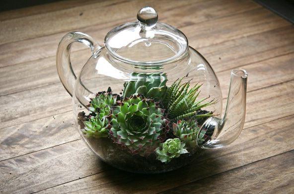 Théière terrarium