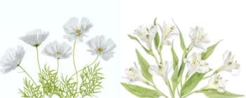 2 Fleurs Blanches Magnifiques Pour Votre Jardin
