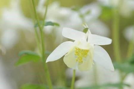 Fleurs Blanches La Liste Des 30 Plus Belles Varietes De