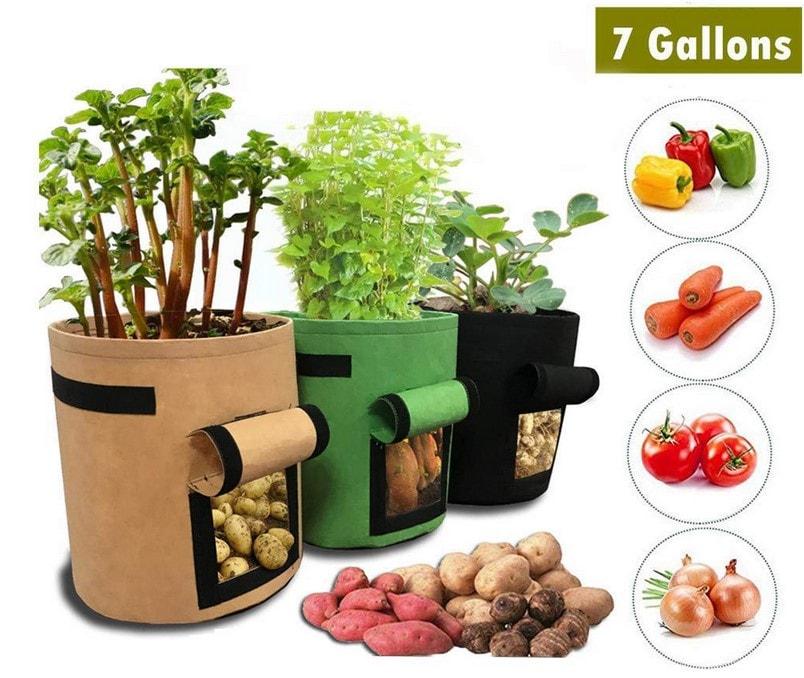 Potager Culture Légumes