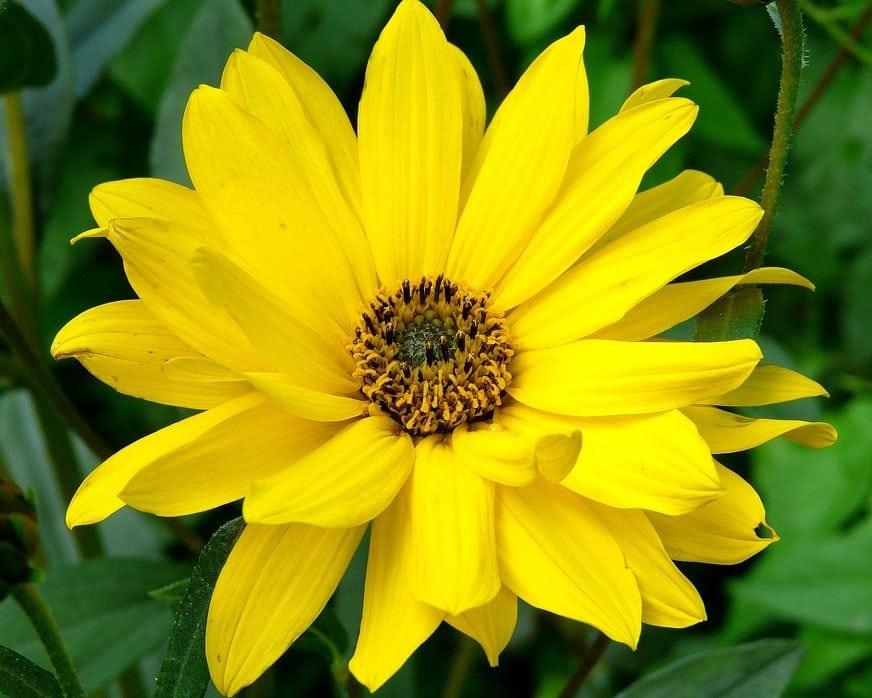 Fleur Jaune La Liste Des 30 Plus Belles Varietes De Fleurs