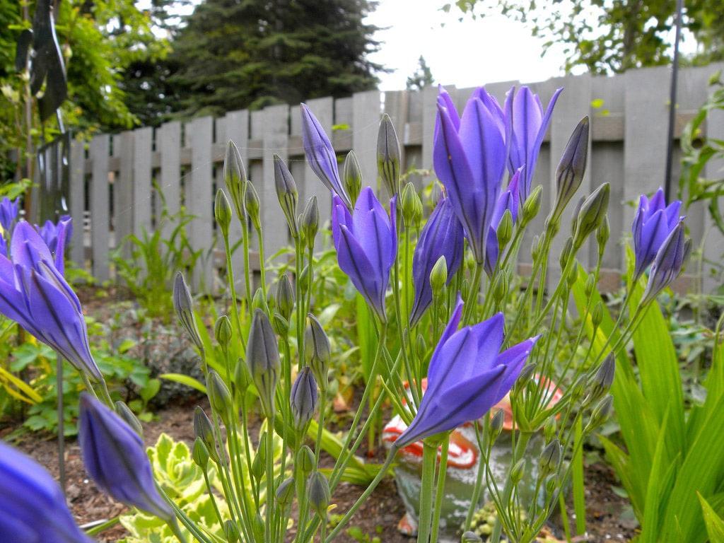 Fleur De Sous Bois Bleue 30 fleurs bleues : la liste complète des plus belles !