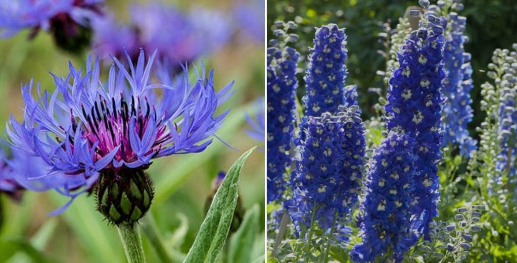 Fleurs Bleues Une