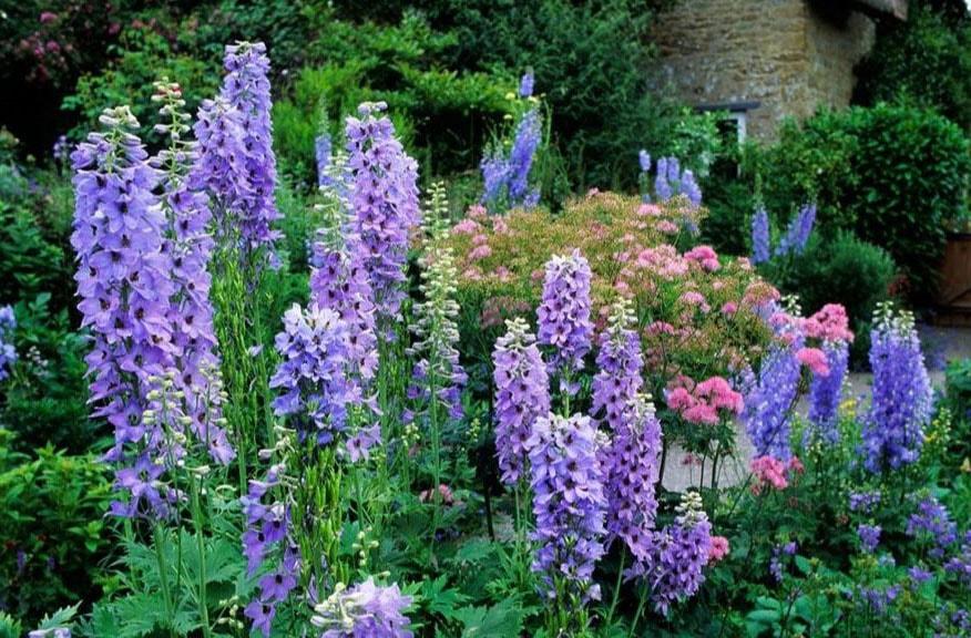 Fleurs Kelle pflanzkelle Jardin Kelle pflanzschaufel Jardin Terrasse Plantes Top