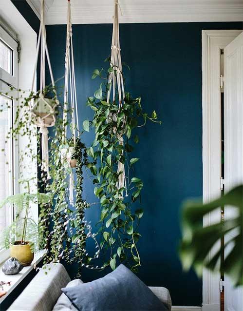 Plantes Sur Mur Bleu Pétrole