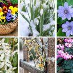 6 variétés de fleur d'hiver