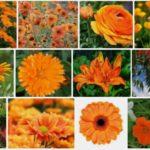 12 variétés de Fleurs Oranges