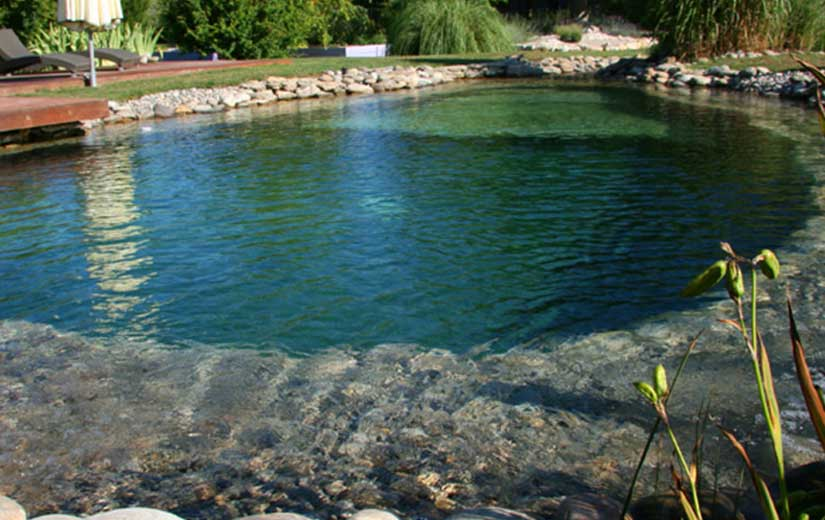 Piscine Naturelle Ecologique