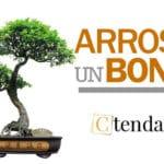 arroser un bonsai