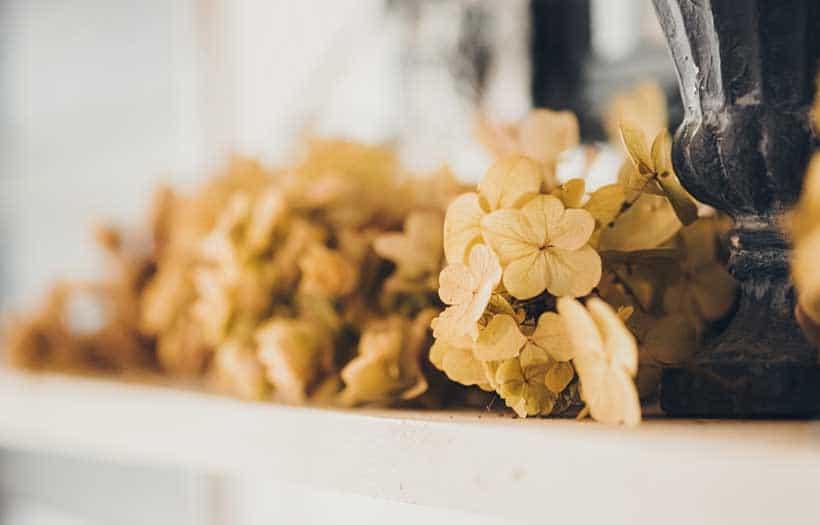 Conserver Fleurs Sechees