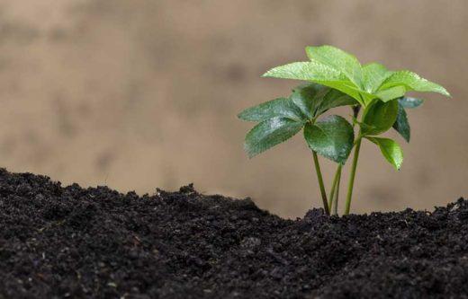 Jardinage Ecologique
