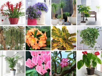 Plantes D Interieurs