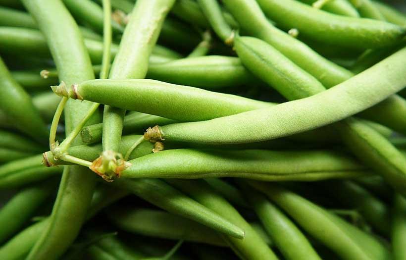 Quand Semer Haricots Verts