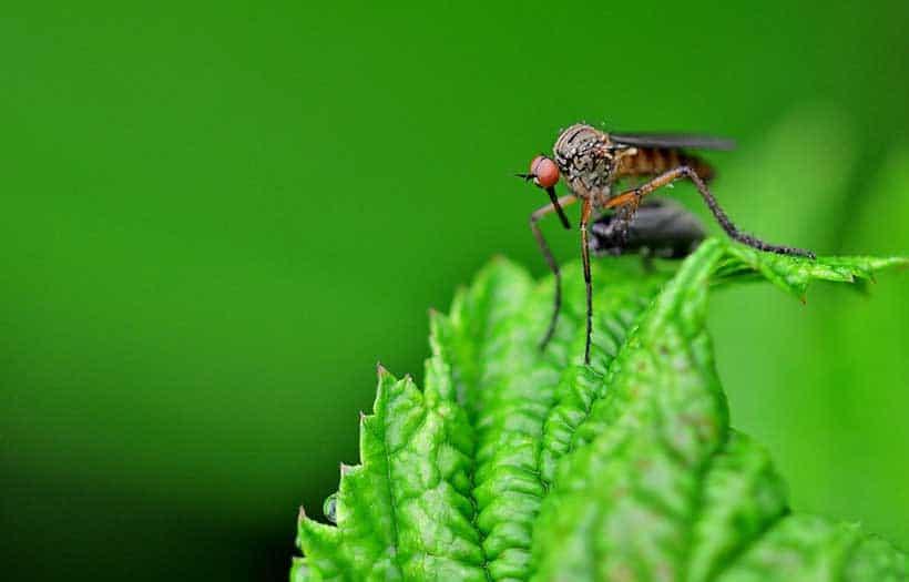 Se Debarasser Moustiques Jardin