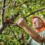 Greffer Arbres Fruitiers