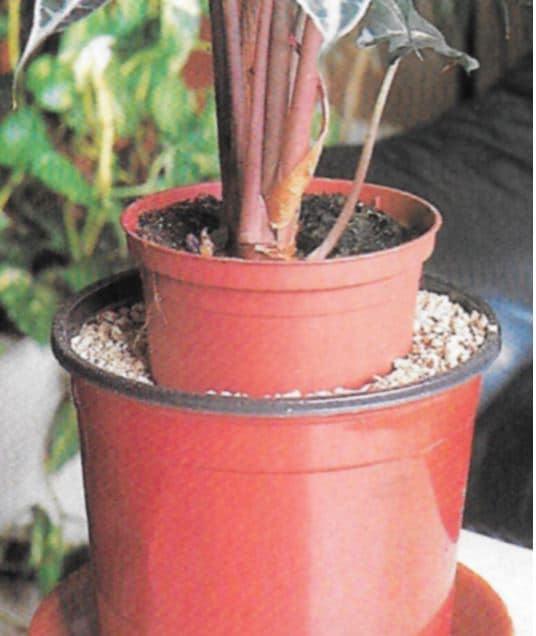 Plantes Sable