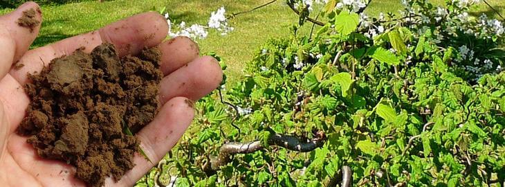 Purin Engrais Bio Pour Arbustes