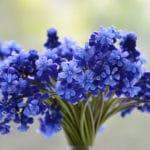 Conserver Bouquet Fleurs